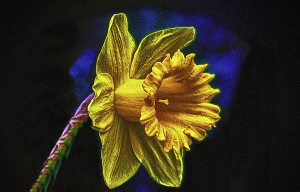 Photograph - Flower Light  by Cliff Norton
