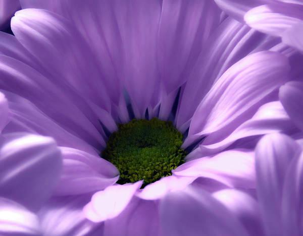 Flower Macro Beauty 4 Art Print