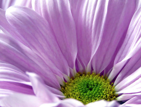 Greetingcards Photograph - Flower Macro Beauty by Johanna Hurmerinta