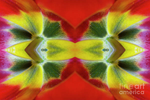 Wall Art - Photograph - Flower Mandala - 0247f by Paul W Faust - Impressions of Light