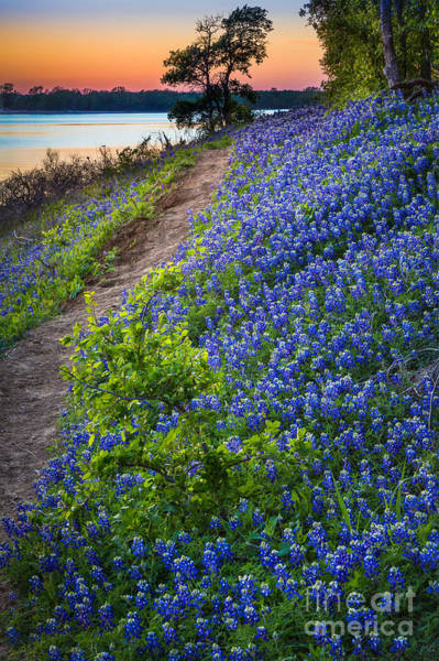 Texas Landscape Photograph - Flower Mound by Inge Johnsson