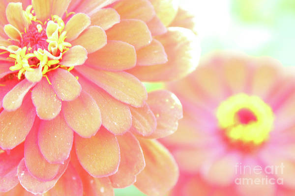 Wall Art - Photograph - Flower Oasis by Becqi Sherman