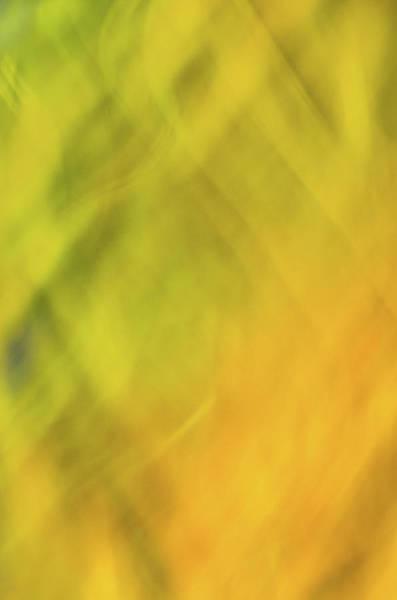 Photograph - Flower Of Fire 1 by Brad Koop