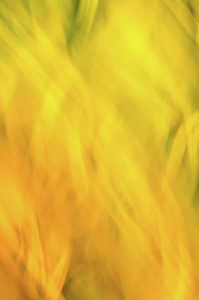 Photograph - Flower Of Fire 2 by Brad Koop