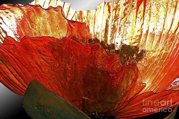 Wall Art - Photograph - Flower Of Glass by Tim Hightower