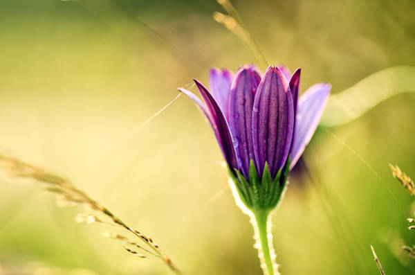 Meadow Photograph - Flower On Summer Meadow by Nailia Schwarz