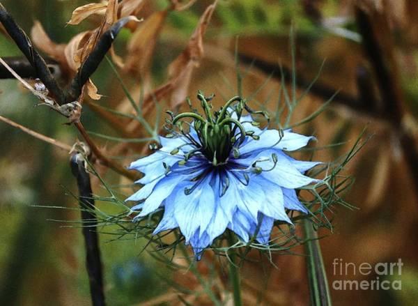 Flower Or Weed Art Print
