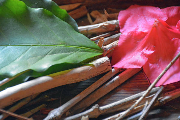 Photograph - Flower Petal, Leaves And Sticks by Bruce Gourley