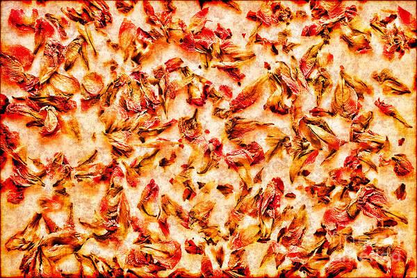 Photograph - Flower Petals Wallpaper by Olivier Le Queinec