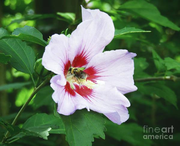 Photograph - Flower Pollen Bee Life by Robert Knight