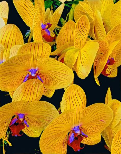 Photograph - Flower Power Aloha Orchids by Joalene Young