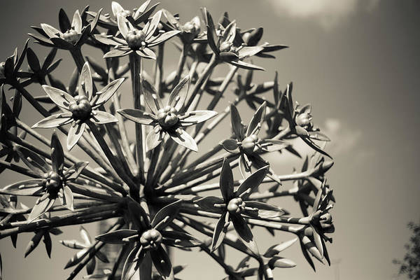 Photograph - Flower Sculpture by Sue Conwell