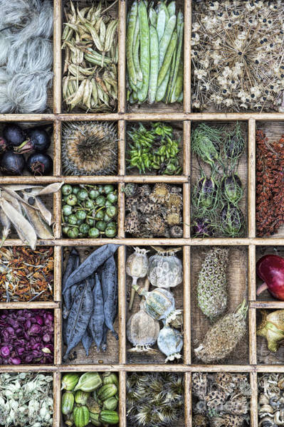 Wall Art - Photograph - Flower Seeds by Tim Gainey