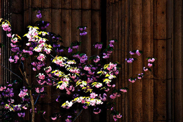 Photograph - Flower Series 43 by George Cabig