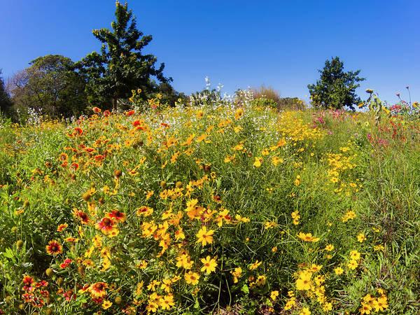 Photograph - Flower Series Gopr2388 by Carlos Diaz