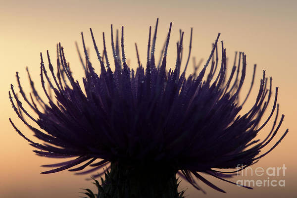 Photograph - Flower Silhouette by Odon Czintos