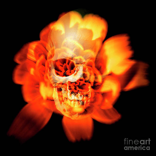 Gothic Photograph - Flower Skull by Jorgo Photography - Wall Art Gallery
