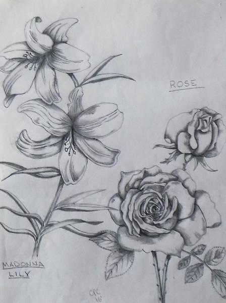 Drawing - Flower Study 1 by Chuck Caputo
