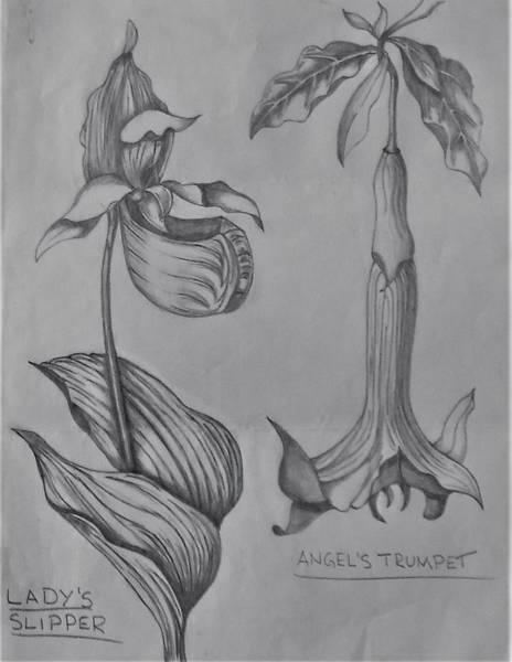 Drawing - Flower Study 3 by Chuck Caputo