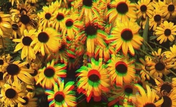 Edit Photograph - Flower Trip by Annie Walczyk