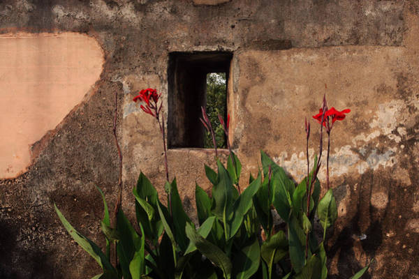 Photograph - Flower Wall by Jed Holtzman