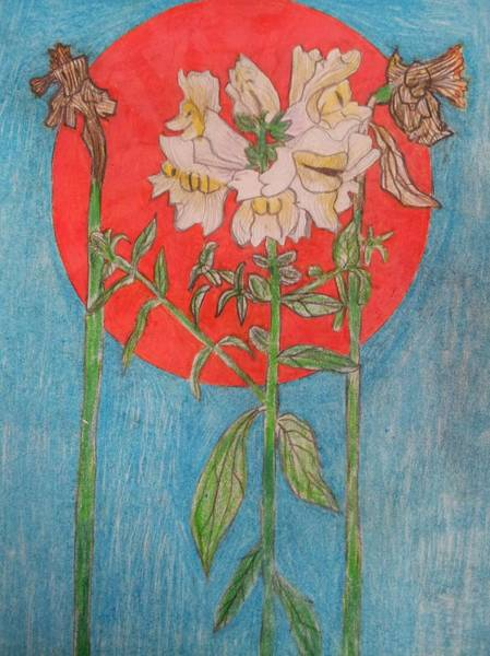 Primary Colors Drawing - Flower by William Douglas