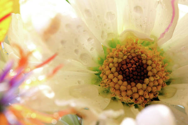 Photograph - Flower With Pastel Colors by Angela Murdock