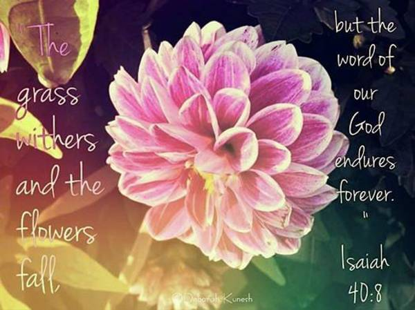 Photograph - Flower With Scripture by Deborah Kunesh