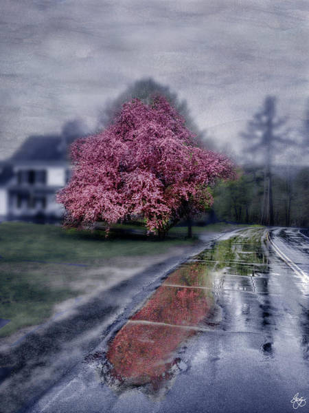 Photograph - Flowering Crabapple In Spring by Wayne King