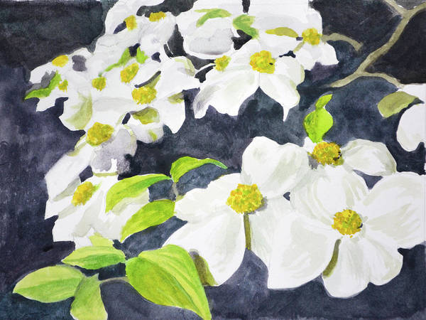 Dogwood Painting - Flowering Dogwood by Armand Cabrera