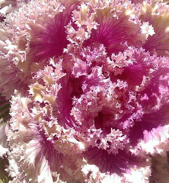 Wall Art - Photograph - Flowering Kale Nebula by Nick Blake