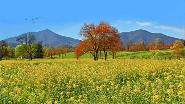 Photograph - Flowering Meadow, Peaks Of Otter,  Virginia. by The American Shutterbug Society