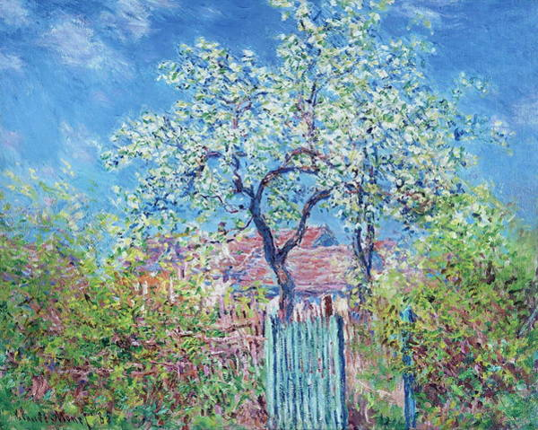 Wall Art - Painting - Flowering Pear Tree, 1885 by Claude Monet