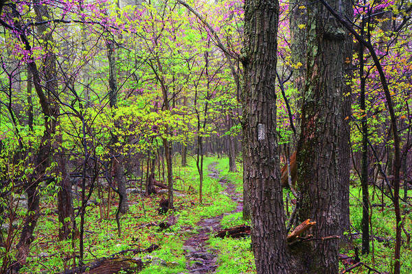 Photograph - Flowering Trees In West Virginia On The Appalachian Trail by Raymond Salani III