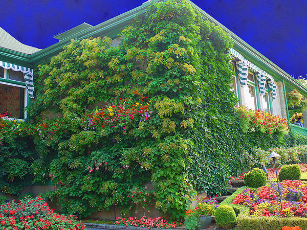 Photograph - Flowering Wall by Lawrence Christopher