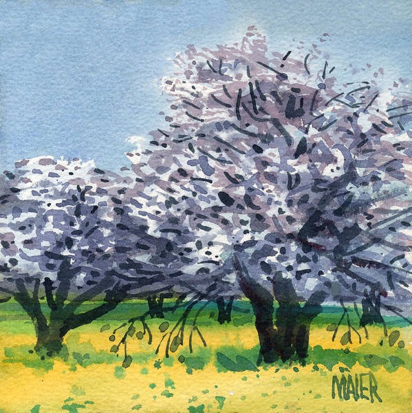 Mustard Painting - Flowering Walnut And Mustard by Donald Maier