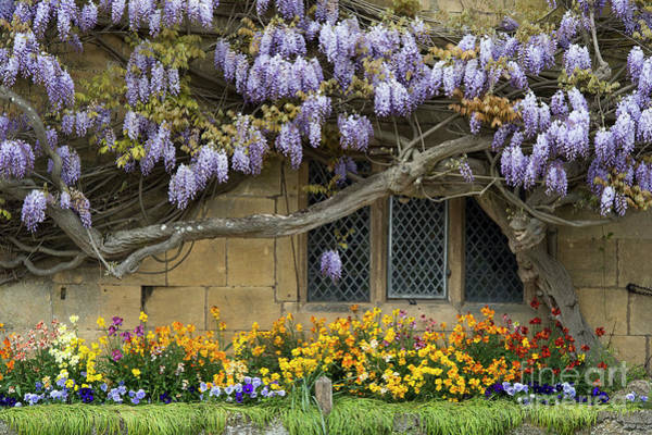 Wall Art - Photograph - Flowering Wisteria Broadway by Tim Gainey