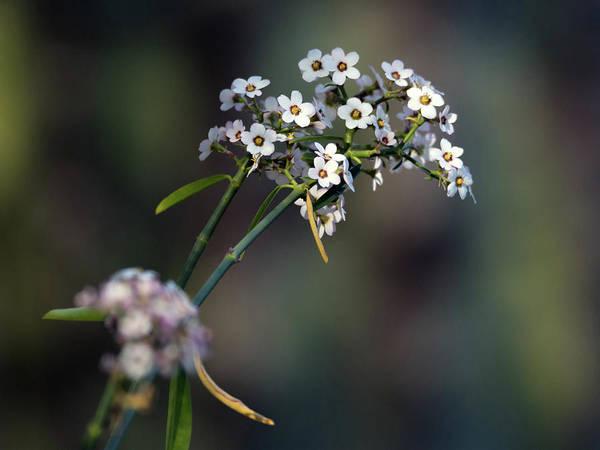 Photograph - Flowers 4321-040418-1cr by Tam Ryan