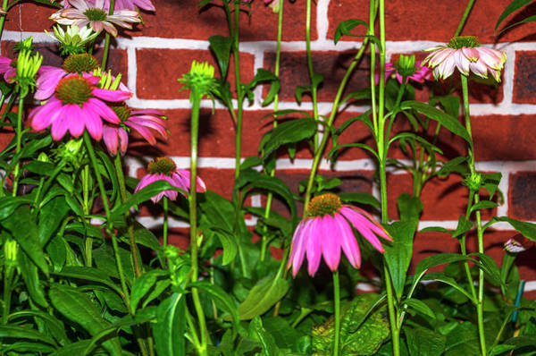 Photograph - Flowers Along A Red Brick Wall by Bill Cannon