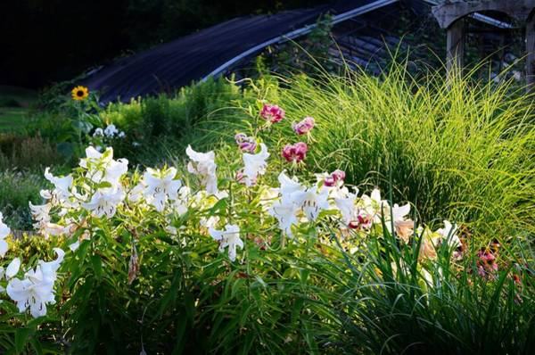 Photograph - Flowers And Light by Kim Bemis