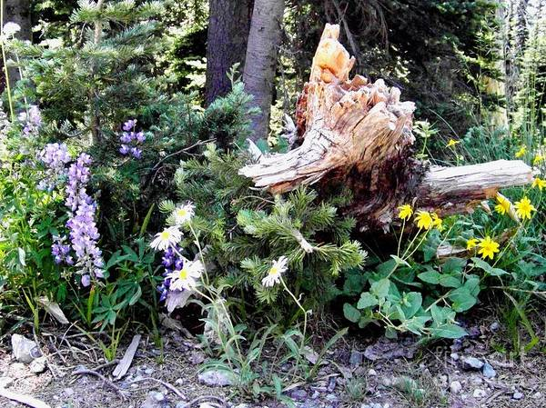 Photograph - Flowers And Stump by Charles Robinson