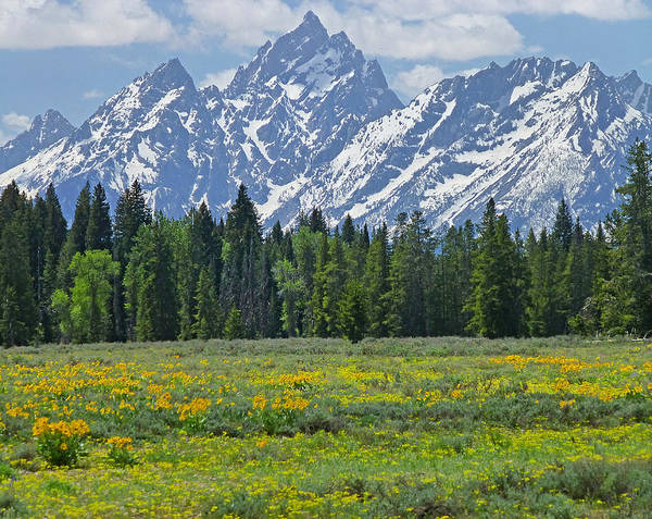 Photograph - Dm9228-flowers And The Tetons  by Ed  Cooper Photography