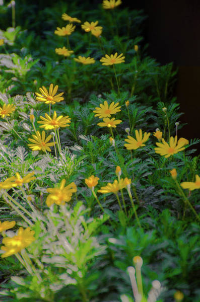 Photograph - Flowers  Are A Foot by Bill Cannon