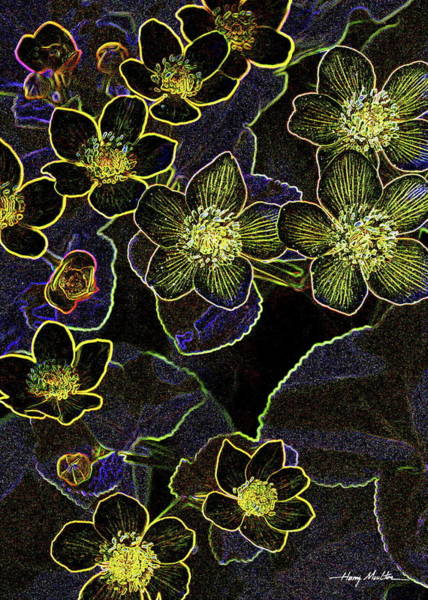 Pyrography - Flowers At Rest 2 by Harry Moulton