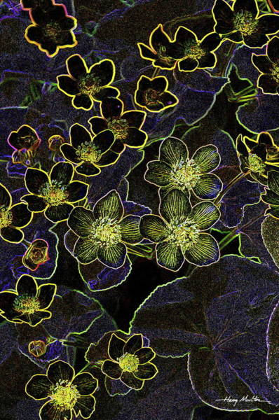 Pyrography - Flowers At Rest by Harry Moulton