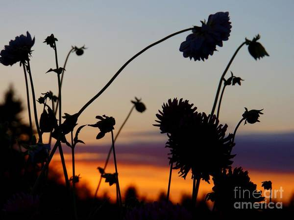 Photograph - Flowers At Sundown by Patricia Strand