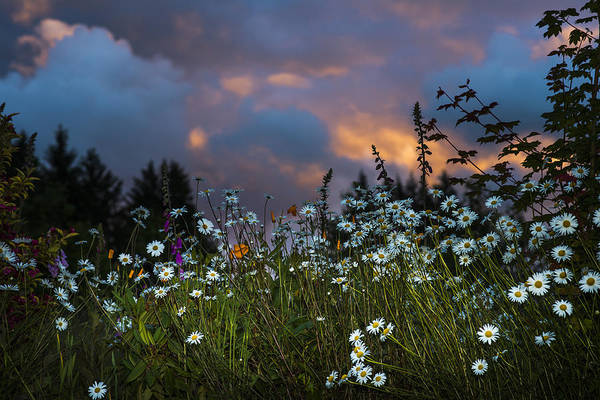 Photograph - Flowers At Sunset by Robert Potts