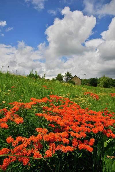 Photograph - Flowers Bloom Near Wheeler Barn In Glacial Park by Ray Mathis