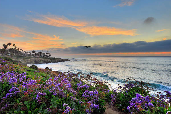 Photograph - Flowers By The Ocean by Mark Whitt