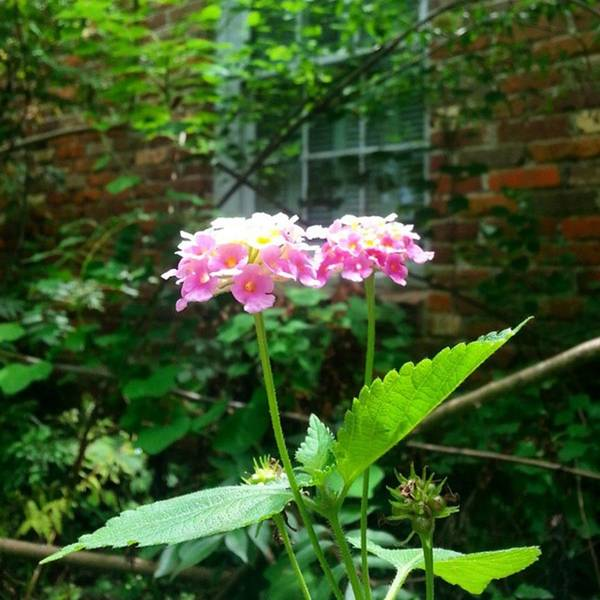 Photograph - Flowers By The Window! #nature #plants by Cheray Dillon